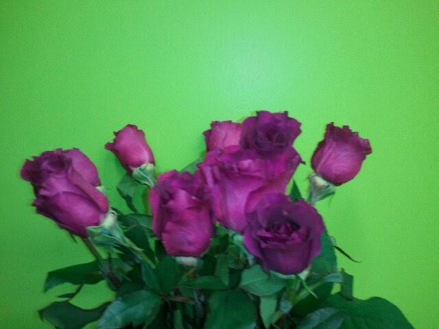 Purple garden roses