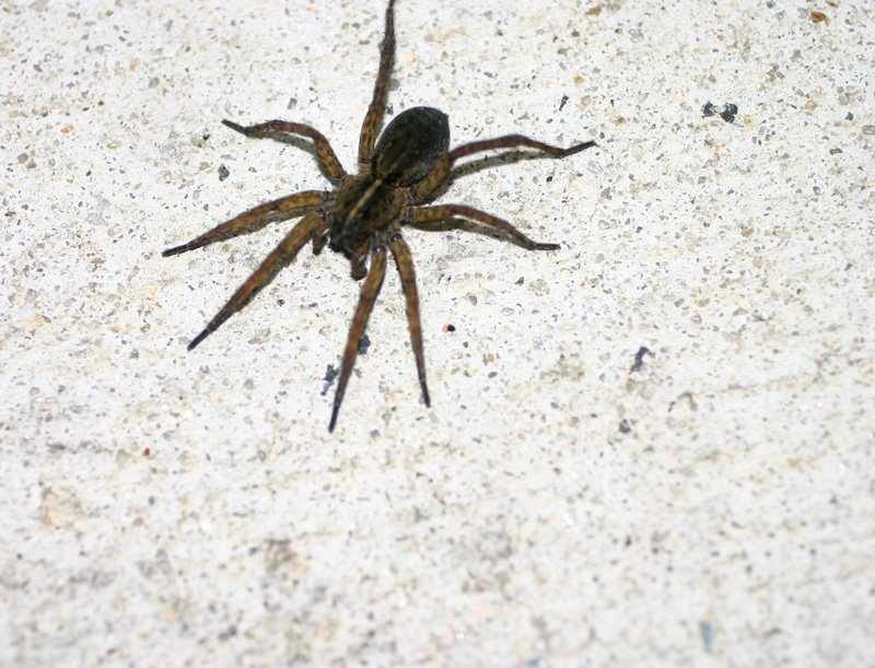 [jun+15+spider+1]