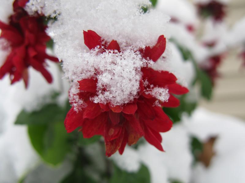 [nov21_snow_1jpg]
