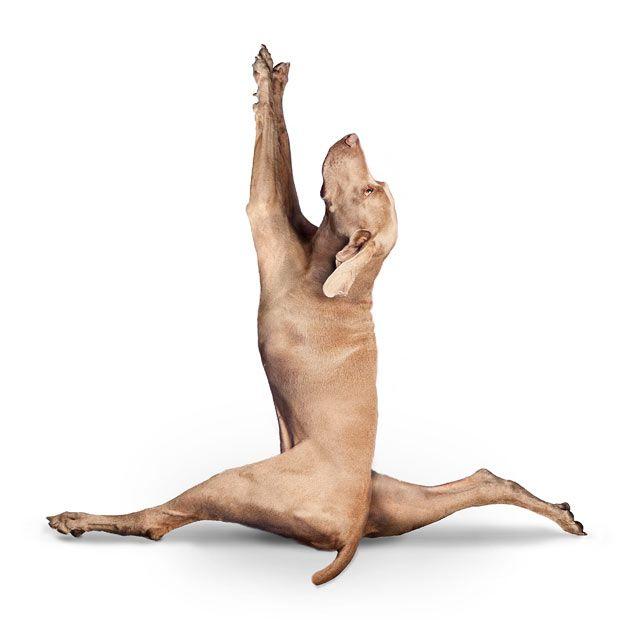 [yoga_dogs_25[1].jpg]
