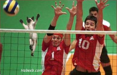 CAT PLAYING VOLLEYBALL