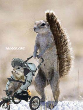 MA AND BABY SQUIRREL IN STROLLER