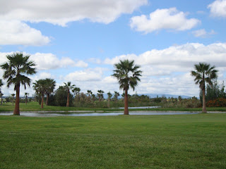 Palm trees in Salgaldos Beach Golf Field Photos - Algarve