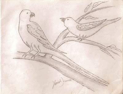 Pencil Drawing sketch of Parrot