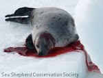 HELP TO END THE HUNT SEALS IN CANADA.
