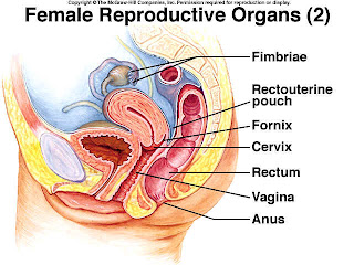 how to become a reproductive health specialist