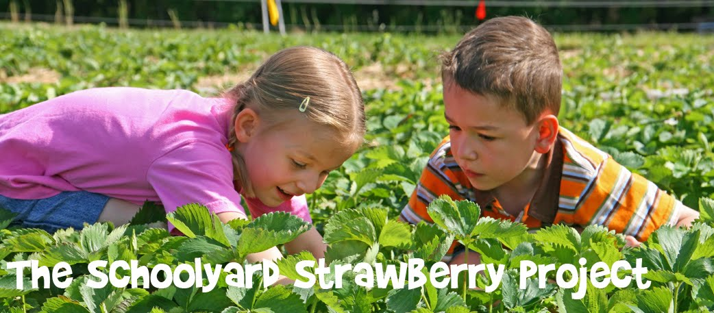 The School Strawberry Garden Project
