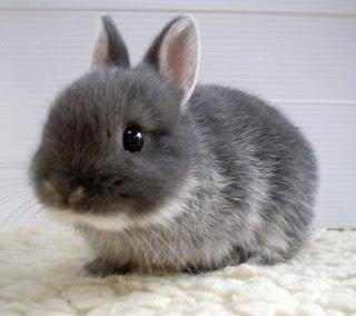 Moja spavaca soba... Bunny7