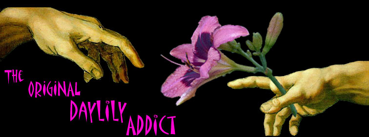 The Daylily Addict