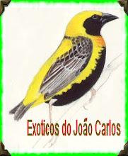 João Badalo Criador de Exoticos