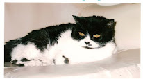 Claudinen kissa Bibi