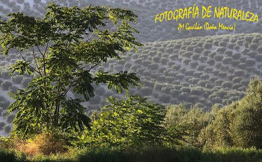 Fotografía de Naturaleza - JM Gavilán