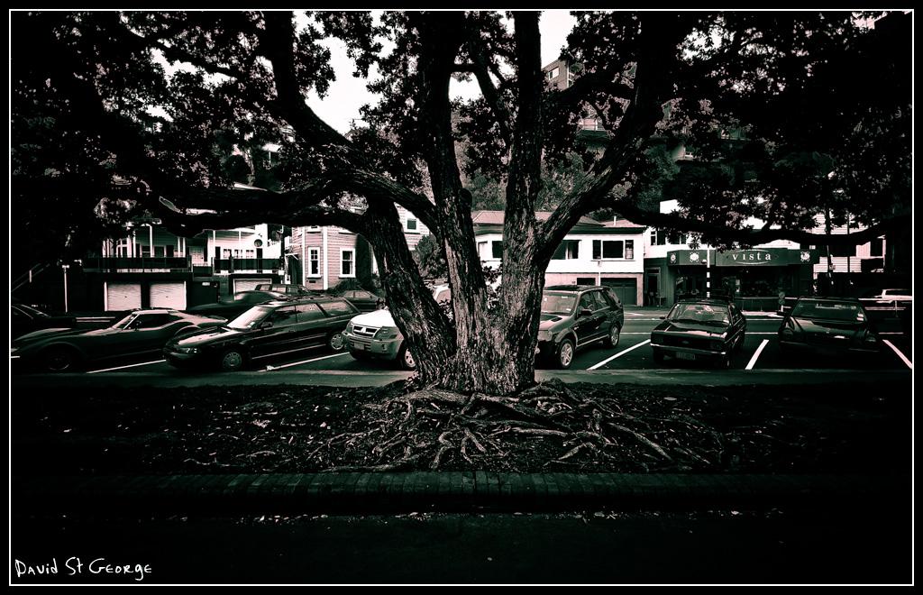 [Tree_STG57822.jpg]