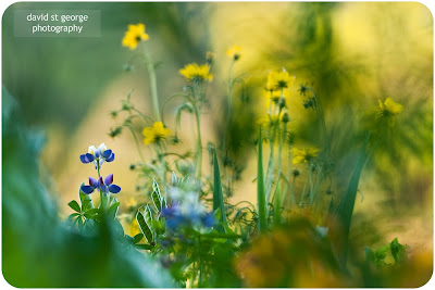 flower art photography david st george