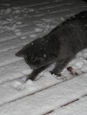 Minus leker i snøen!