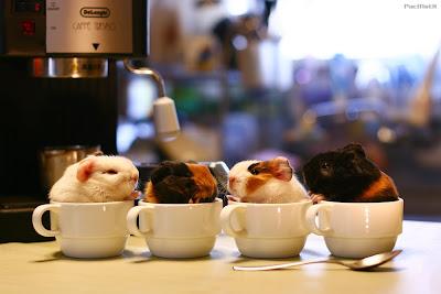 Conejillos de indias: Sweet Coffees