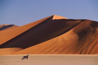 Gemsbok and Sand Dunes, SossusVlei, Namibia