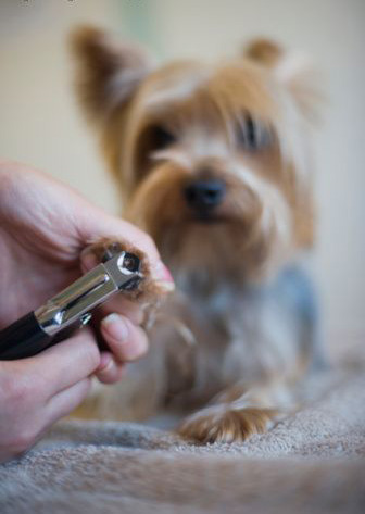 dog talk 101 how to trim your dog s nails