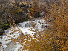nice fall colors