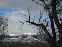 Cool tree and mountains