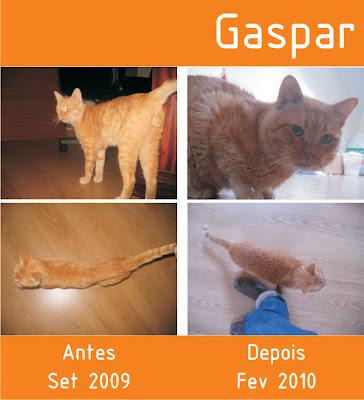 Gaspar, Macho Adulto, FIV +, Margem Sul Gaspar+Antes+e+Depois