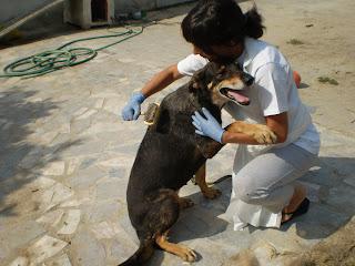 Mica - A cadelinha SRD mais meiga do mundo ;) Margem Sul Fotos+leao+,+micas,+material+para+blog+003