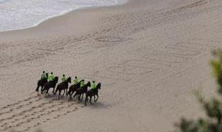 Mounted police tidy up the beach and fertilise the sand