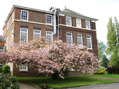 Building behind tree covered in pink blossom