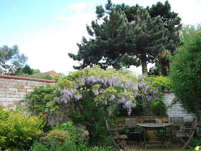 Wisteria, trees, table and chairs