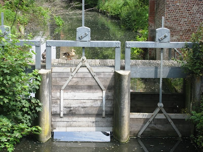 Duck on a canal sluice gate