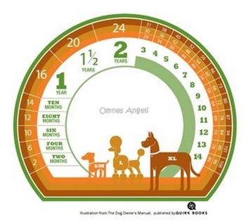 Calcule a idade de seu animal!