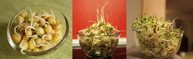 Oppskrift Bønnespirer Hjemme Bean Sprouts