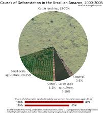 Causas de la Deforestación en la Selva Amazónica Brasileña, 2000-2005
