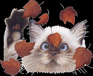 Gato de olho nas folhas...