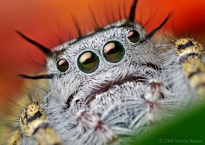 kann man was gegen spinnen machen