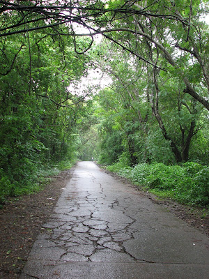 Sanjay Gandhi national park