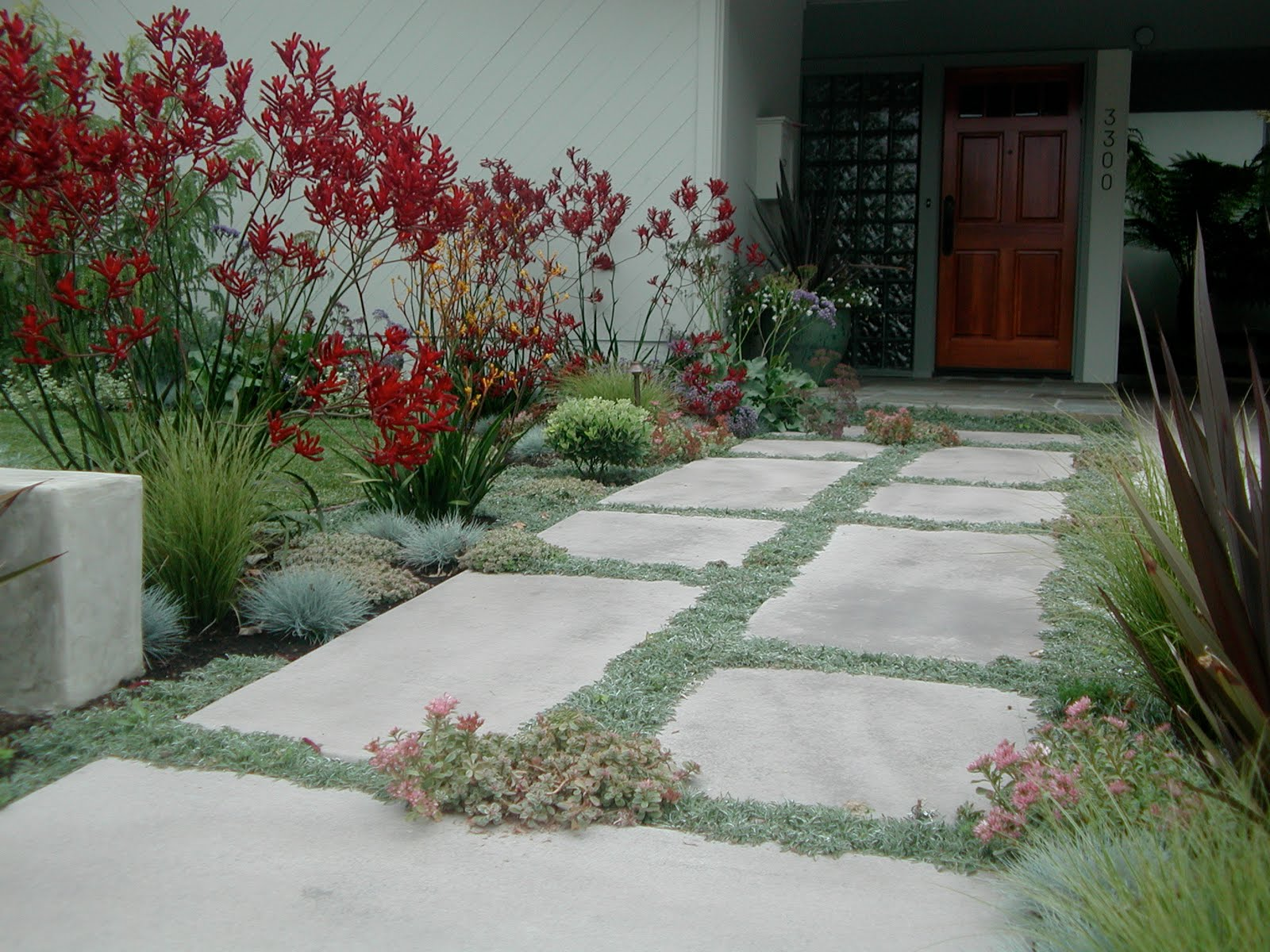 How to plant ground cover between pavers - Concrete Pavers Planted With Dymondia Ground Cover Between Is A Better Alternative To Solid Walkways As It Is More Permeable This Border Is Edged With A