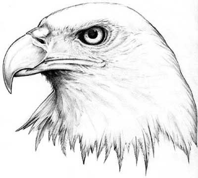 When you look at the eagle tattoo design, they have different meanings