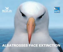Help save our Albatross