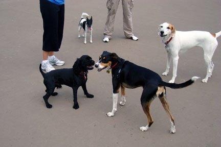 [DogMeeting]