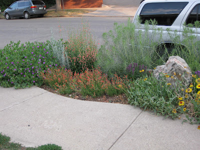 Pixie plots native plant low water curbside garden for Curbside garden designs