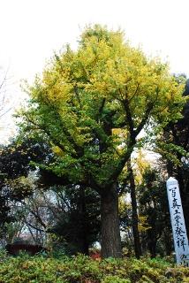 日本の写真工業発祥の地