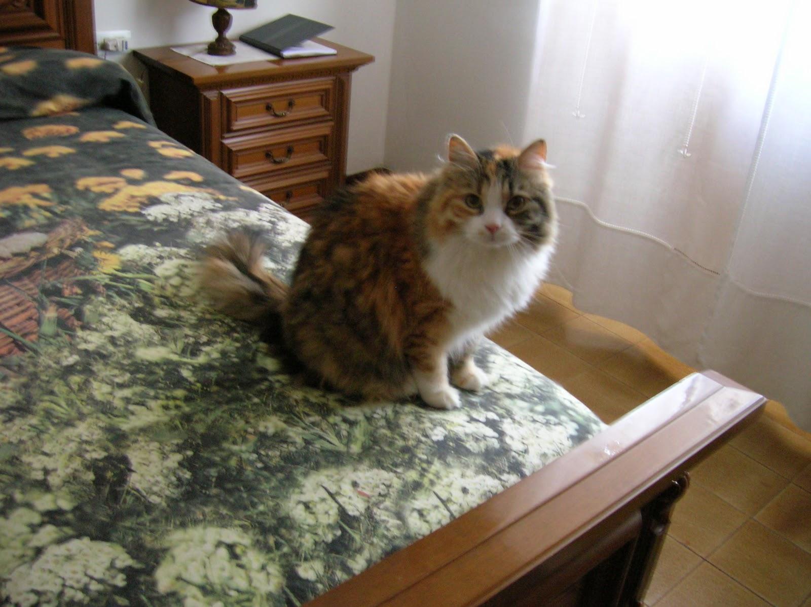 l 39 orto dei pelosi gatti da appartamento