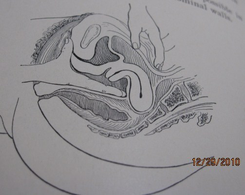 g spot anatomy paper Anatomy on diagnostic imaging the pharynx and esophagus are evaluated by barium swallow areas of normal constriction in the esophagus are the.