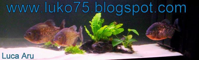 blog di luko