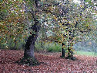 i colori dell'autunno... bosco incantato?