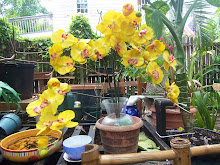 the potting and planting table.