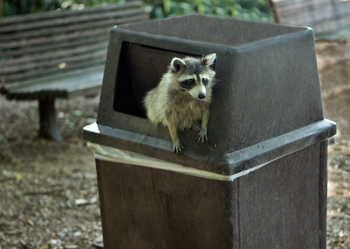 Trashcan Dog Can T Get Into