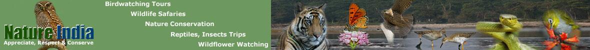 Nature India Tours