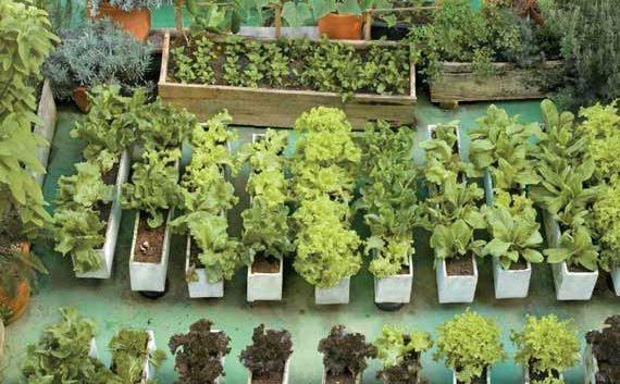 horta jardim e pomar:FAZENDO PARTE DA SOLUÇÃO: HORTA EM CASA
